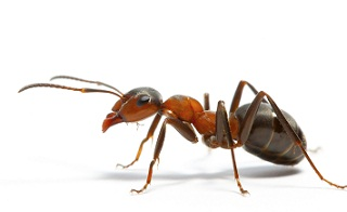 The ant and the grasshopper essay