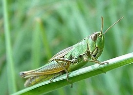 Name of Insects in Hindi and English