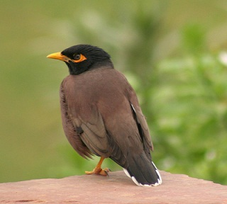 Birds Name in Hindi and English पक्षियों के नाम List of Birds