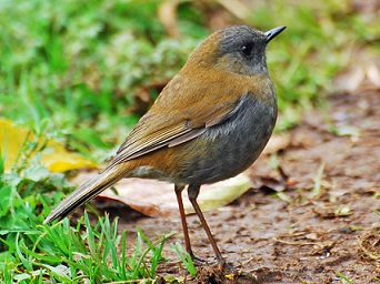 Birds Name in Hindi and English पक्षियों के नाम List of