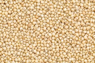 recipe: linseed meaning in gujarati [39]