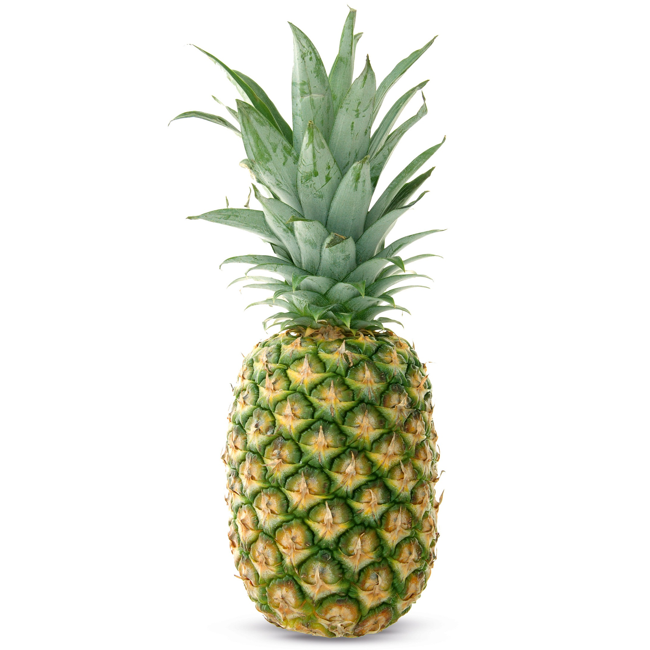 how to grow pineapple in hindi