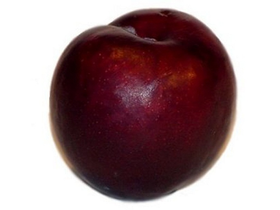 how to plant blood plums and what fertilizer to use
