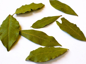 bay leaf essay Get bay leaf potted topiary online or find other novalue products from hobbylobbycom.