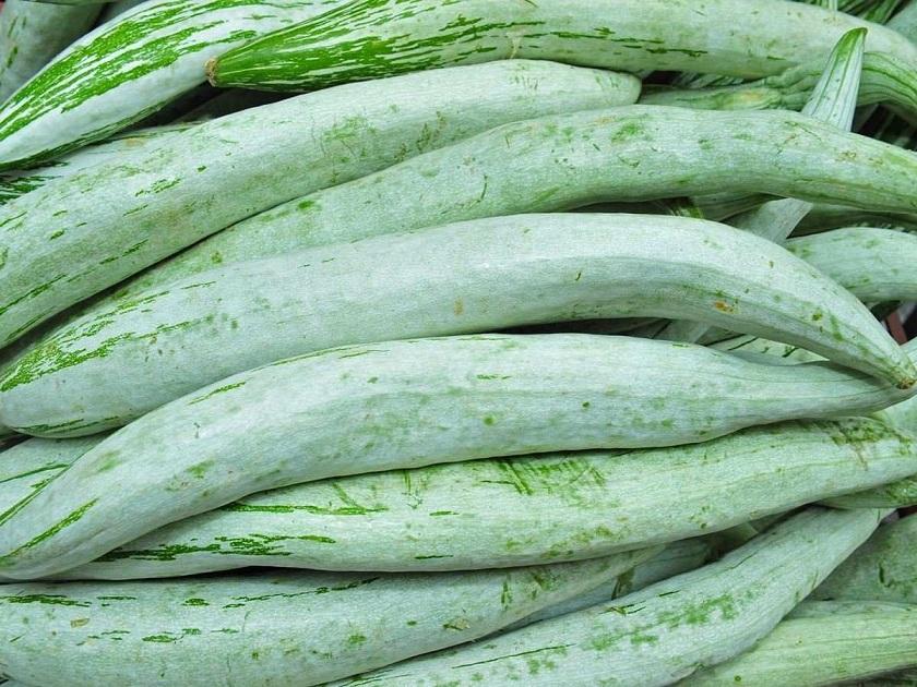 Snake Gourd (स्नेक गॉर्ड) – चिचिण्डा , चचेंडा [ Chichinda , Chachenda ] Trichosanthes cucumerina