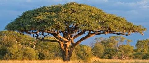 Tree in Hindi and English - पेड़ों के नाम