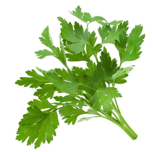Coriander fruit – धनिया फल  IMAGES, GIF, ANIMATED GIF, WALLPAPER, STICKER FOR WHATSAPP & FACEBOOK
