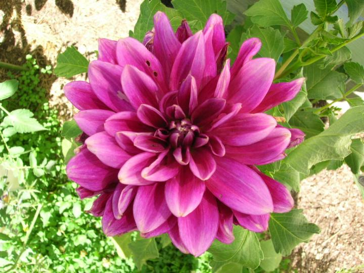 flower names in hindi and english फ ल क न म list of flowers