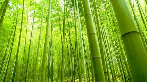 Scientific Name Bambusoideae